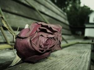 heart broken, HOLAA, Holaafrica.org